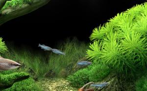 aquarium webshop