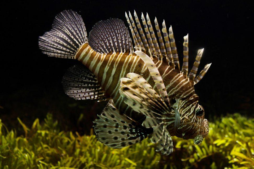 Aquarium onderhoud