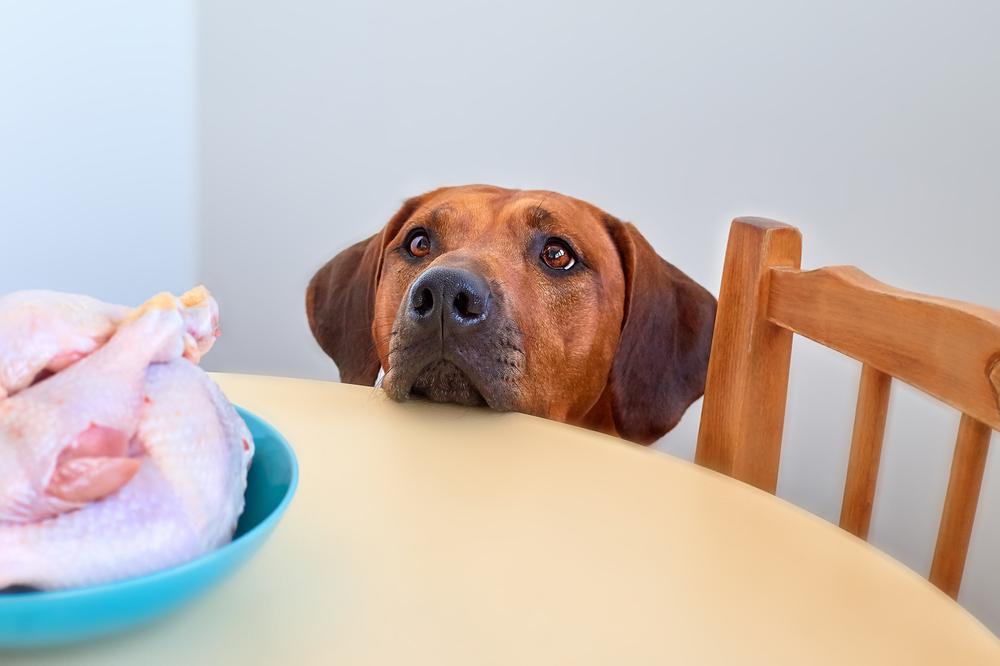 rauw vlees hond