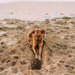gebeten door een hond